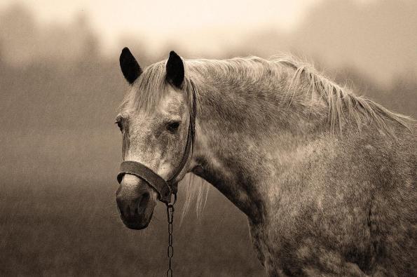 Resultado de imagem para cavalo no poço