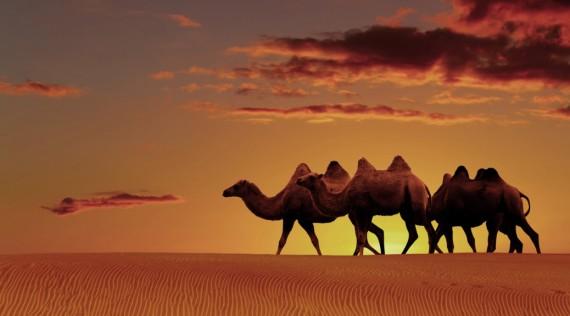 camelo-destaque-1038x576.jpg